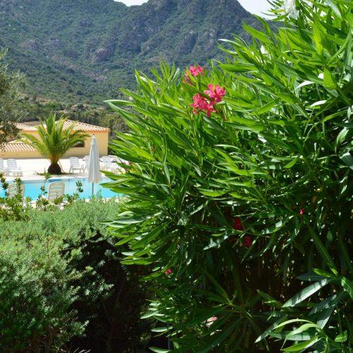 hotel-cardedu-ogliastra-sardegna-la-piscina5
